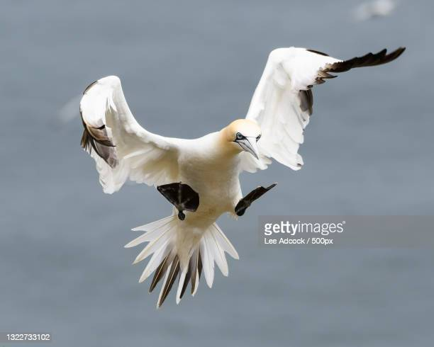 close-up of seagulls flying against sky - animal body part stock pictures, royalty-free photos & images