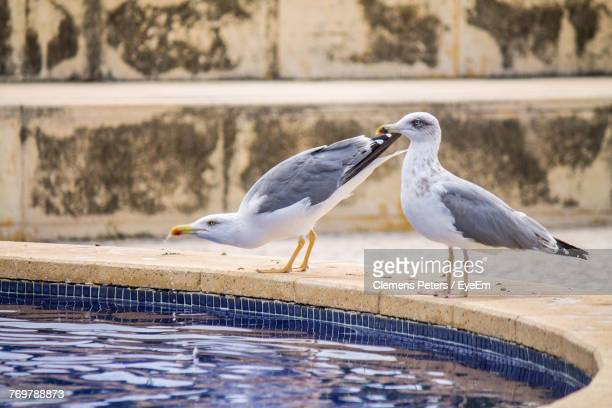 Close-Up Of Seagulls Perching By Pond