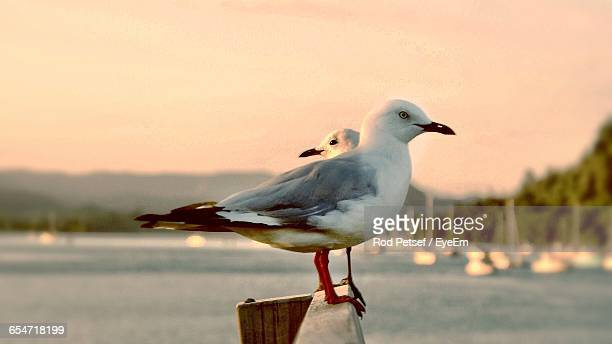 Close-Up Of Seagulls Perching On Railing By Sea Against Sky