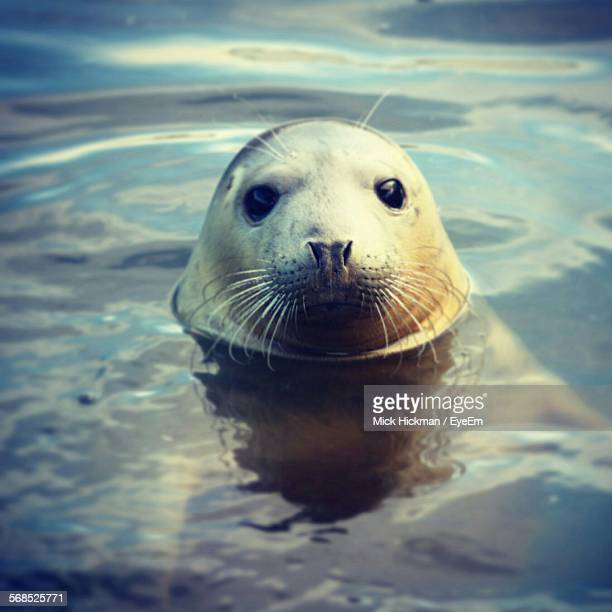 Close-Up Of Seal In Water