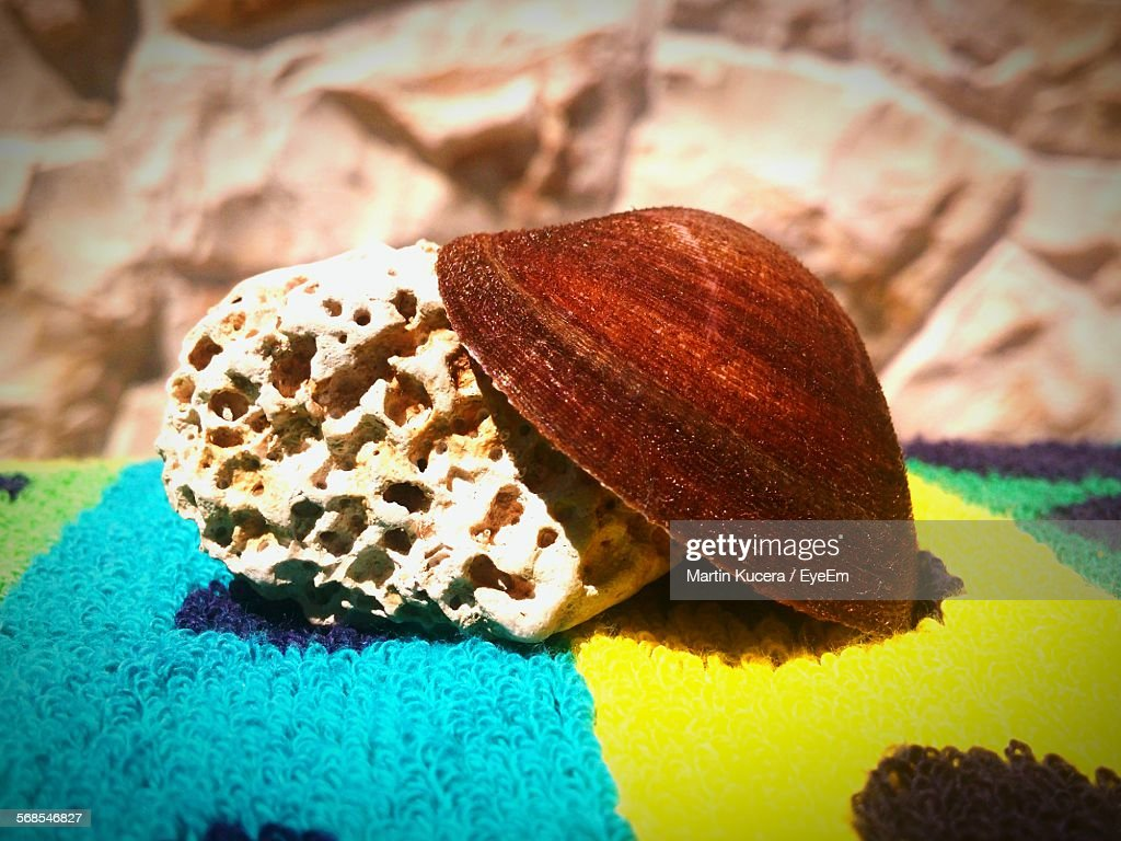 Close-Up Of Seashell And Rock On Carpet : Stock Photo