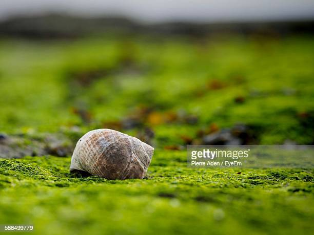 Close-Up Of Seashell On Moss
