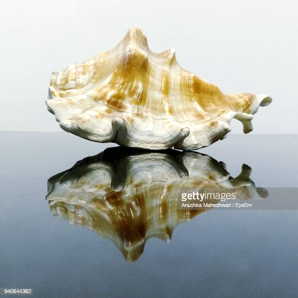 Close-Up Of Seashell On Table Against White Background