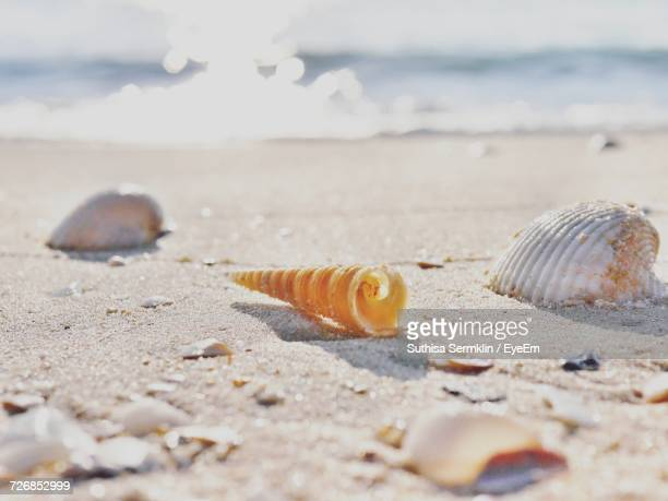 close-up of seashells on sand at beach - hermit crab stock pictures, royalty-free photos & images