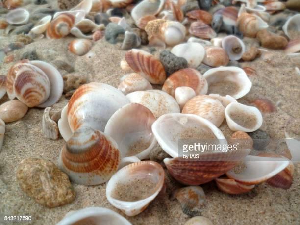 Close-up of seashells on sand, full frame