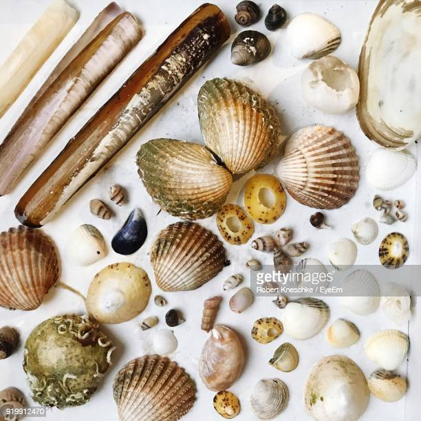 Close-Up Of Seashells On Table