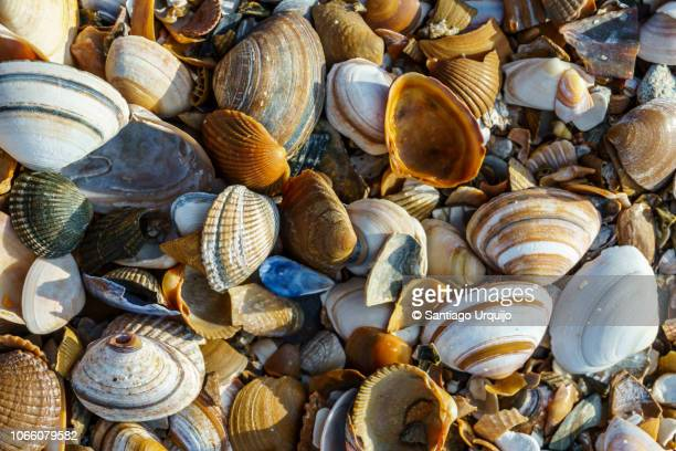 close-up of seashells on the beach - seashell stock pictures, royalty-free photos & images