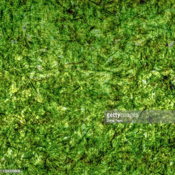 closeup of seaweed - nori stock pictures, royalty-free photos & images