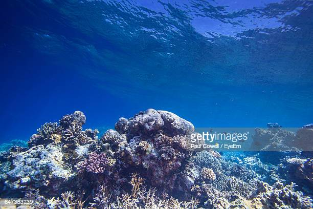 close-up of seaweed underwater - at the bottom of stock pictures, royalty-free photos & images