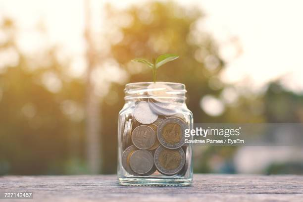 Close-Up Of Seedling On Coins In Glass Jar