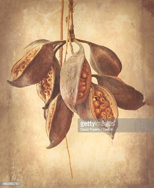 Close-Up Of Seeds In Pod Against Wall