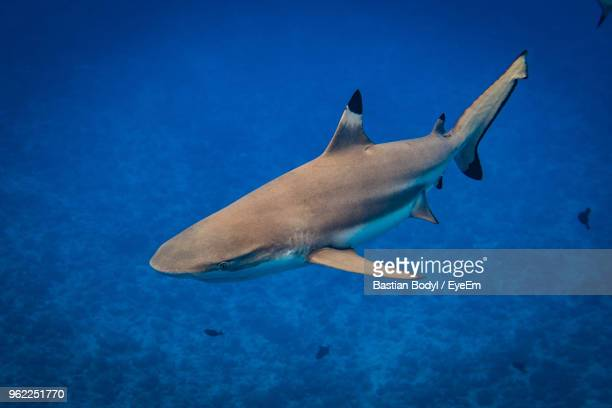 close-up of shark swimming in sea - reef shark stock pictures, royalty-free photos & images