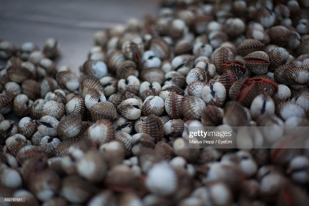 Close-Up Of Shells : Foto stock