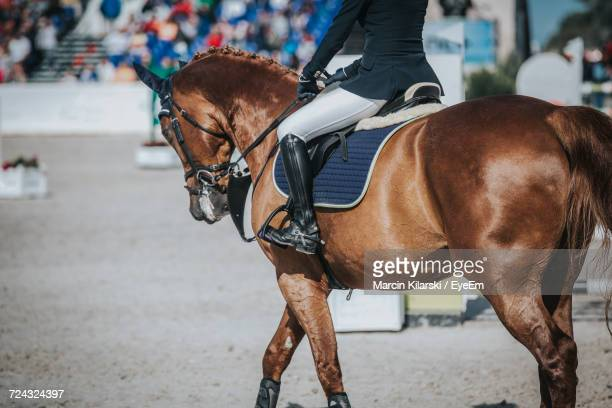 Close-Up Of Show Horse