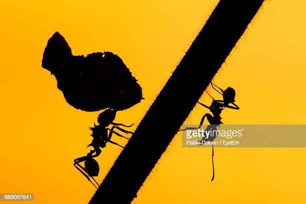 Close-Up Of Silhouette Ants On Twig Against Clear Sky During Sunset