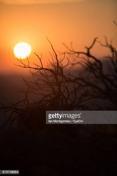 Close-Up Of Silhouette Bare Tree Against Sea During Sunset