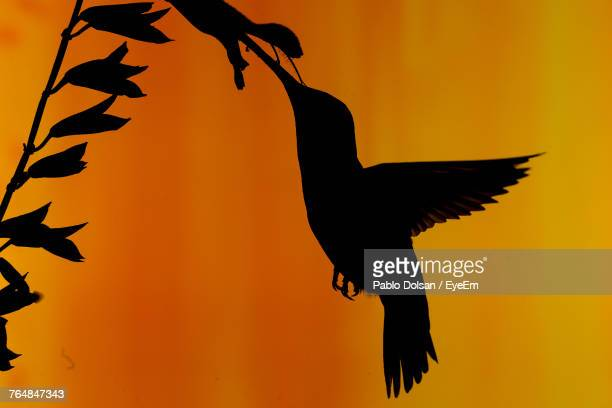 Close-Up Of Silhouette Bird Flying Against Orange Sky