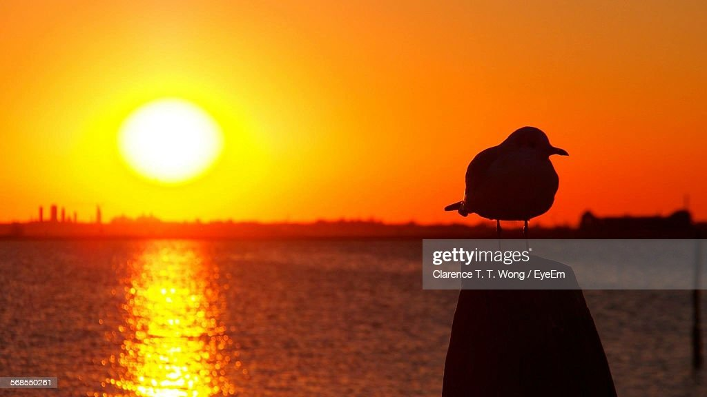 Close-Up Of Silhouette Bird Perching On Wood Against Lake During Sunset : Stock Photo
