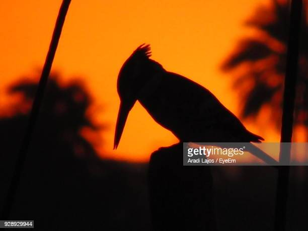 Close-Up Of Silhouette Bird Perching On Wooden Post Against Sky During Sunset