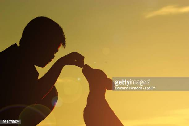 Close-Up Of Silhouette Boy Feeding Dog At Sunset
