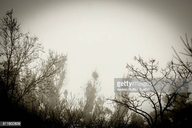 close-up of silhouette branches against clear sky - andres ruffo stock-fotos und bilder