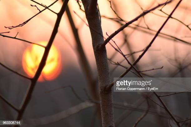 Close-Up Of Silhouette Branches Against Sky During Sunset