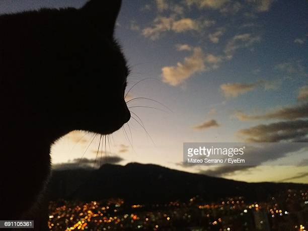 Close-Up Of Silhouette Cat Against Sky During Sunset