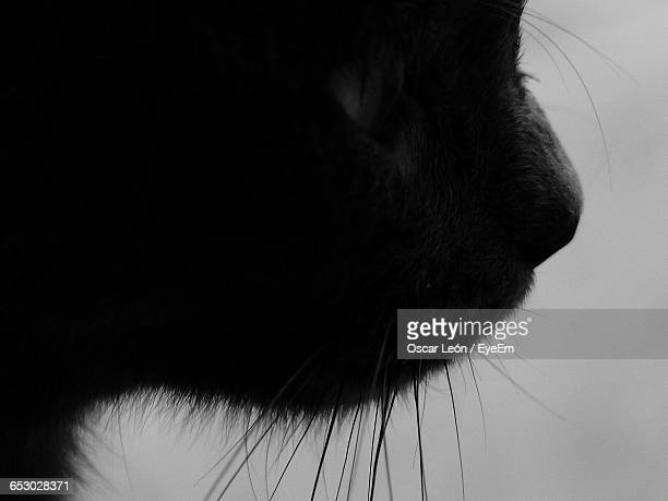 Close-Up Of Silhouette Cat At Home