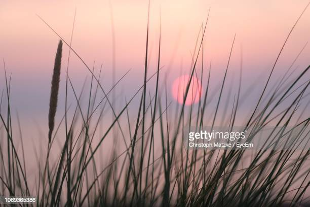close-up of silhouette grass on field against sky - fehmarn stock pictures, royalty-free photos & images