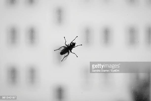 Close-Up Of Silhouette Housefly On Glass Window