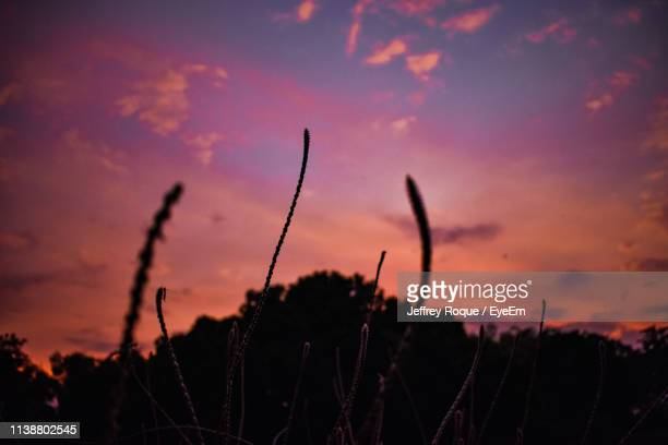 close-up of silhouette plants against sky at sunset - jeffrey roque stock photos and pictures