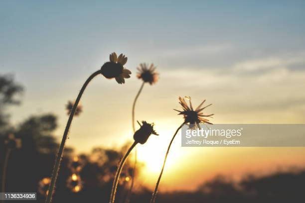 close-up of silhouette plants against sky during sunset - jeffrey roque stock photos and pictures