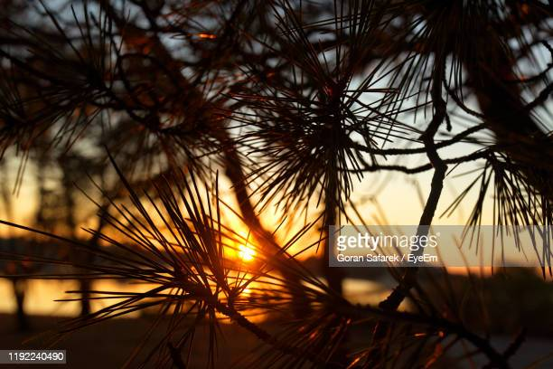 close-up of silhouette plants against sky during sunset - アドリア海 ストックフォトと画像