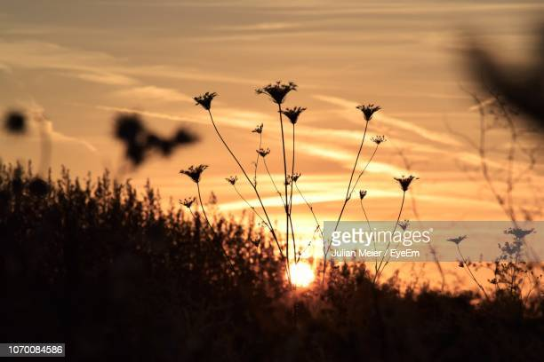 close-up of silhouette plants on field against sky during sunset - número de personas fotografías e imágenes de stock