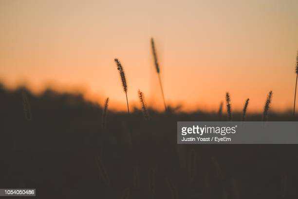 Close-Up Of Silhouette Plants On Field Against Sunset Sky