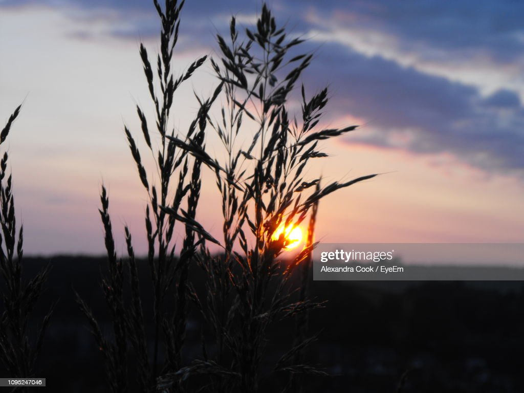 Close-Up Of Silhouette Plants On Field Against Sunset Sky : Stock-Foto