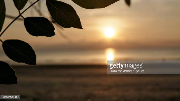 Close-Up Of Silhouette Tree Against Sea At Sunset