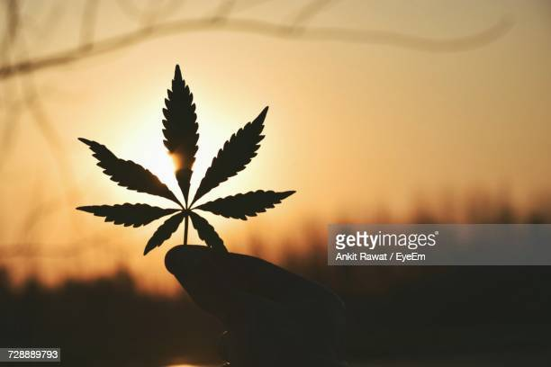 close-up of silhouette tree against sky at sunset - marijuana leaf stock photos and pictures