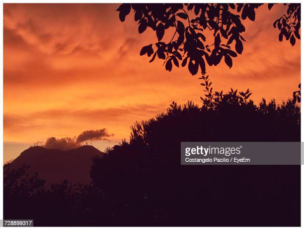 close-up of silhouette tree against sky at sunset - costangelo pacilio foto e immagini stock