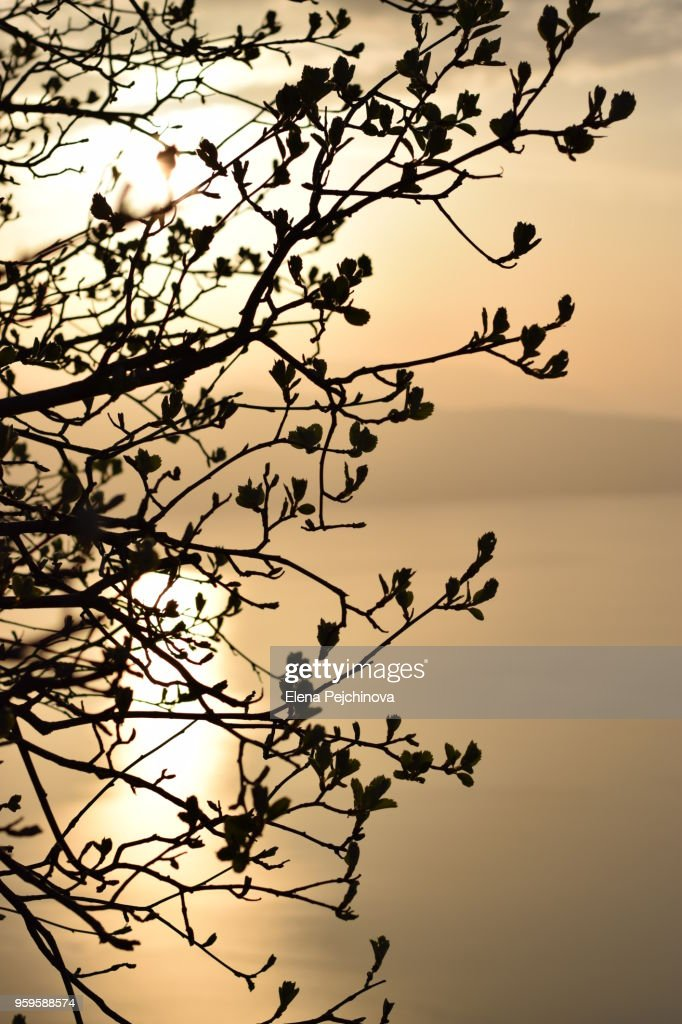 Close-Up Of Silhouetted Branches Against Sunset : Stock Photo
