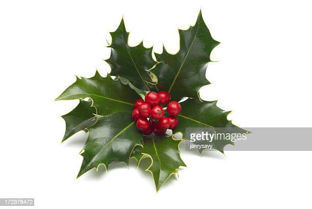 close-up of single holly bunch on white background - holly stock pictures, royalty-free photos & images