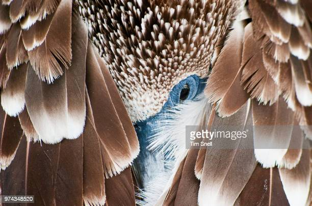 close-up of sleeping bird, galapagos, ecuador - beige stock-fotos und bilder