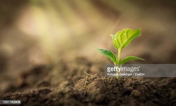 close-up of small plant growing on field - seedling stock pictures, royalty-free photos & images