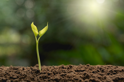 Close-Up Of Small Plant Growing On Land - gettyimageskorea