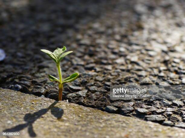 close-up of small plant growing on land - sapling stock photos and pictures
