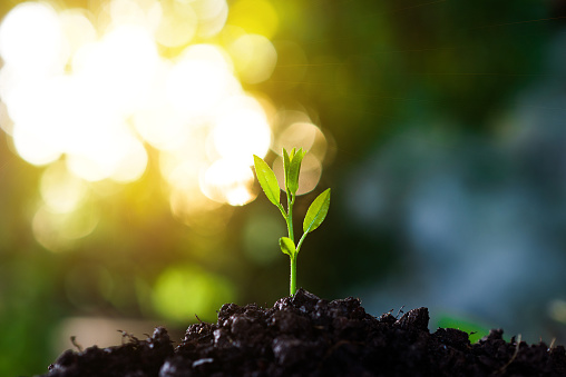 Close-Up Of Small Plant Growing Outdoors - gettyimageskorea
