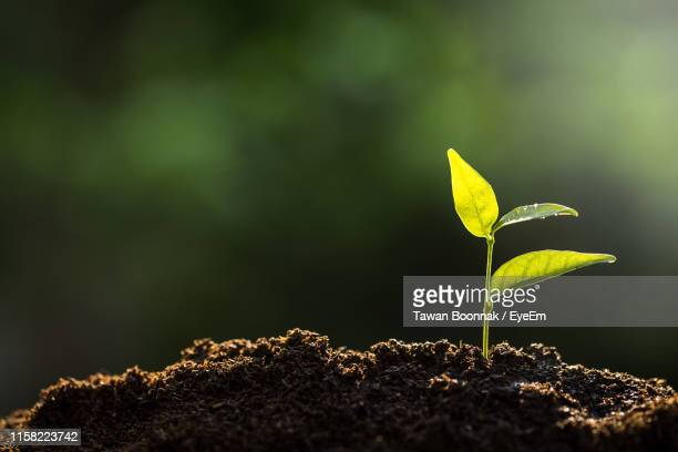 close-up of small plant growing outdoors - seedling stock pictures, royalty-free photos & images