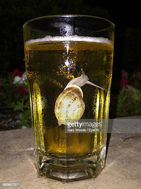 Close-Up Of Snail In Beer