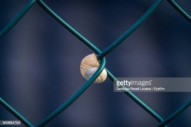 Close-Up Of Snail On Chainlink Fence