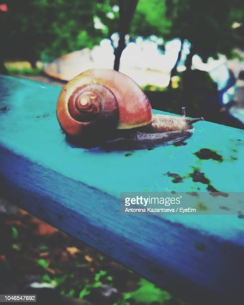 Close-Up Of Snail On Fence